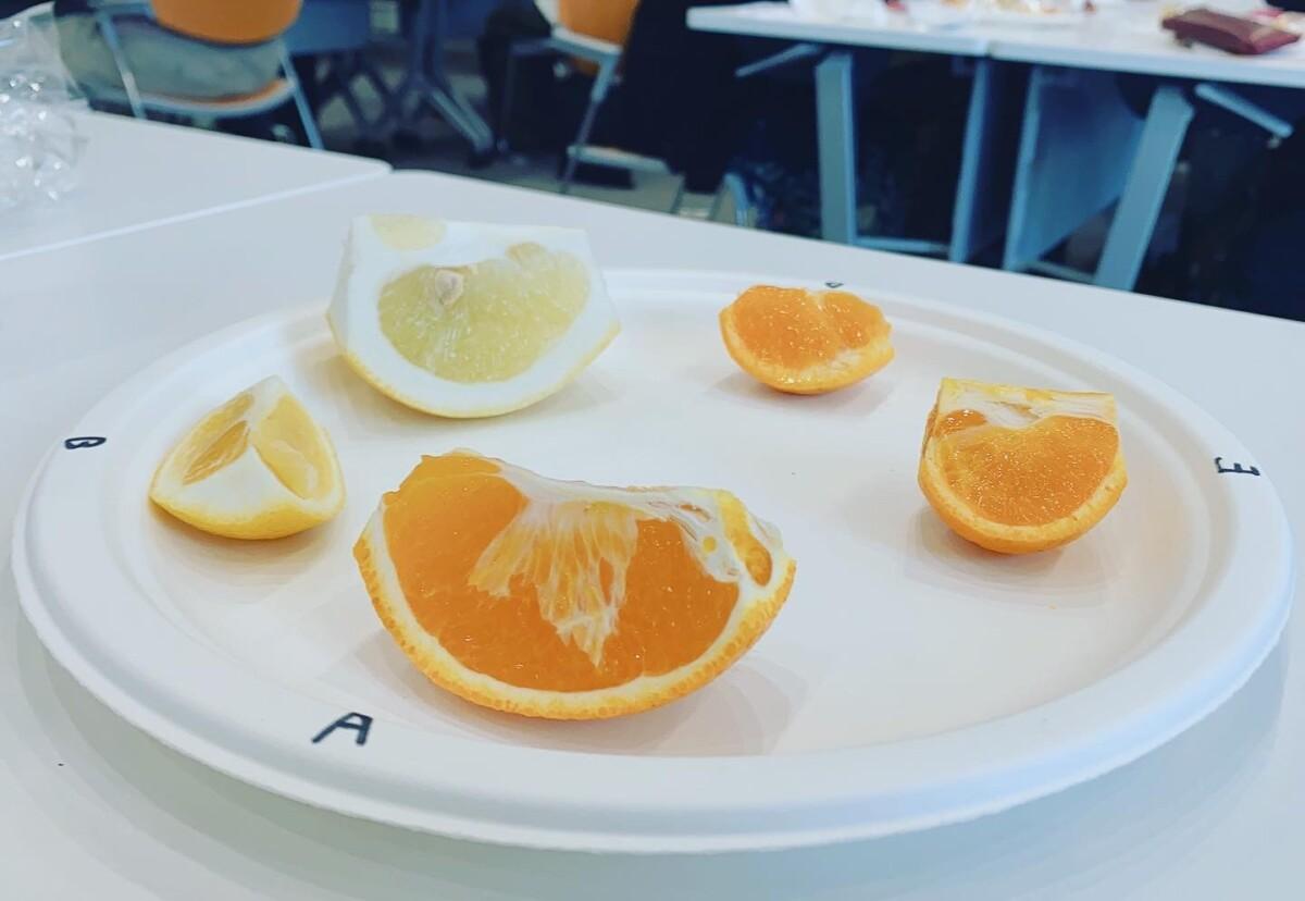 柑橘テイスティング